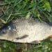 Последнее зарыбление перед зимой! Все едем на рыбалку в Эко-Парк «Рождествено» (Бабынинский район, д.Бесово)!!!